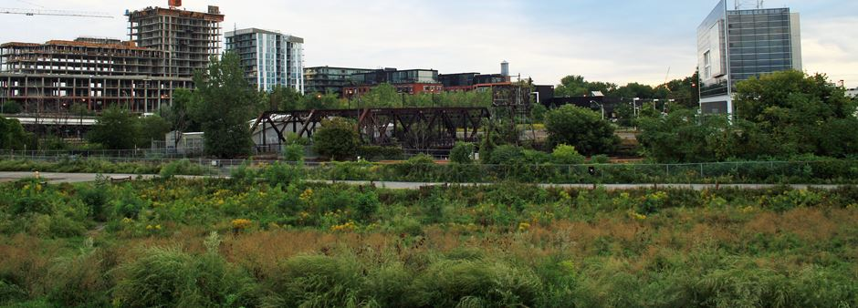 field of tall grasses and perennials with bike path beyond. Metal railway bridge and industrial buildings beyond.