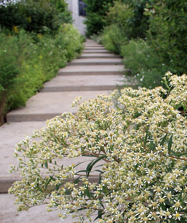 stepped pathway with native plantings