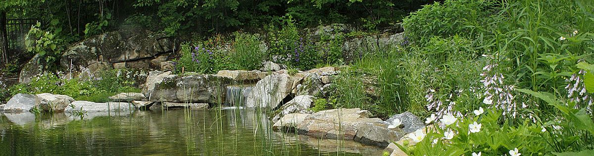 Swim pond with waterfall and native plants